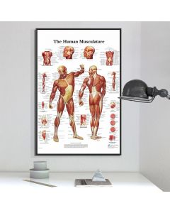 Monday Kids Muscle System Posters Silk Cloth Anatomy Chart Human Body School Medical Science Educational Supplies Home Decoration