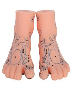 Monday Kids 17CM Acupuncture foot model Chinese medicine teaching model Human body meridian acupoint model includes left and right