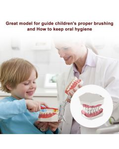 Monday Kids Adult Dental Teeth Model and Toothbrush with Removable High-Grade Teeth Teaching Model for Kids