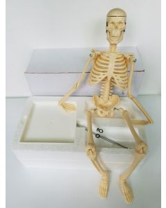 Monday Kids 45cm human skeleton model teaching aid Mini - Skeleton model Learning Resources Human Skeleton Model