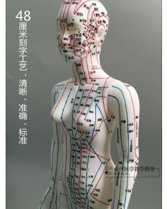 Monday Kids Human Body Acupuncture Model Female Meridians Model Chart Book Base 48cm